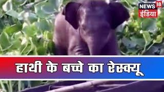 Assam: हाथी के बच्चे का रेस्क्यू | May 11, 2019