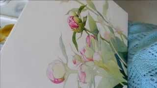 Pictta - Draw Peonies (Saint-P 2014)