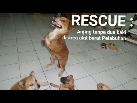 RESCUE : anjing tanpa kaki depan diantara alat berat pelabuhan tanjung priok