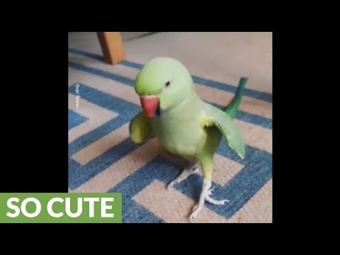 Talking parrot plays cute game with owner