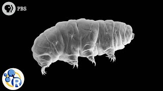 Why Tardigrades are Some of the Most Hardcore Critters on the Planet