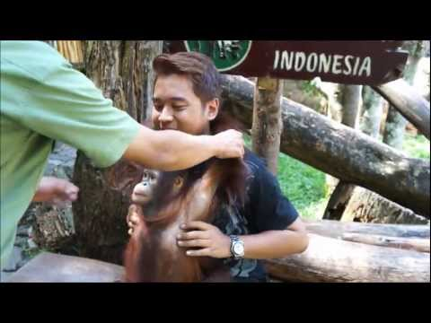Orang Utan & Baby Tiger, Bogor, Indonesia | Backpacking 50days Journey | Travel Video Blog