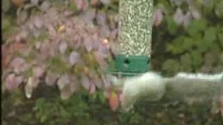 Yankee Flipper Squirrel Proof Birdfeeder