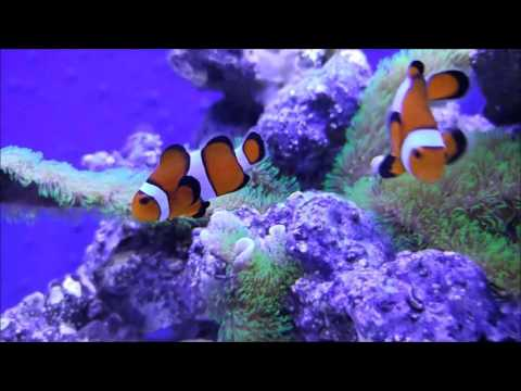 How to setup a 20 gallon long reef tank, NO water change test
