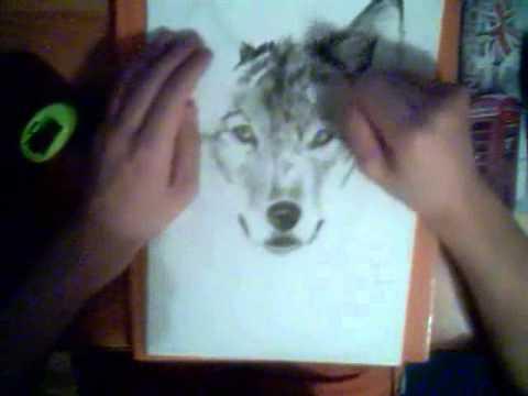 потрясающий рисунок карандашом Волк