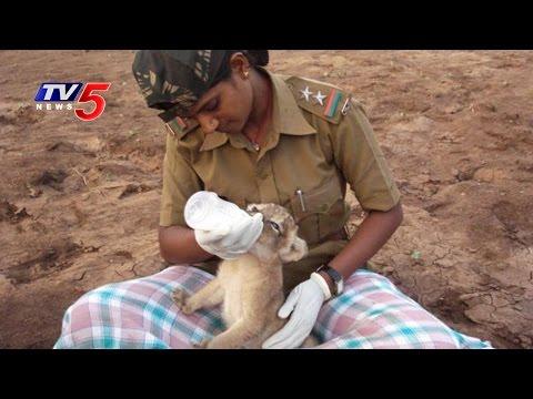 Women Rangers In Gir Forest !! | True Or Fake ? | TV5 News