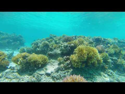 Amedee Island, New Caledonia, Reef Clip