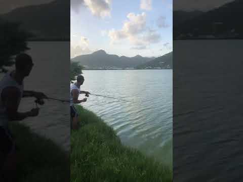 Tarpon Fishing: Sint Maarten