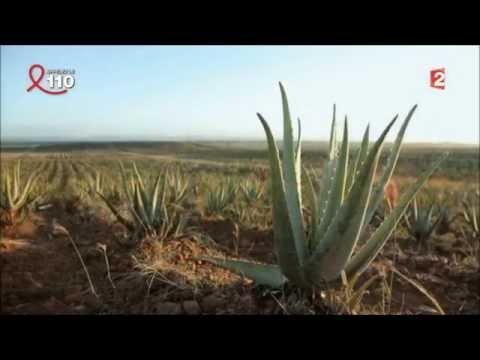 Vertus Aloe Vera Reportage télématin france2 2014 04 05