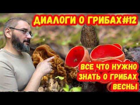 Вопрос: Ирга – это дерево или кустарник И в каком регионе России встречается?