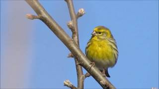 Watch Luka Bloom My Singing Bird video