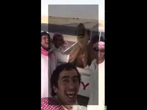 Camel Laugh   Willi Torres