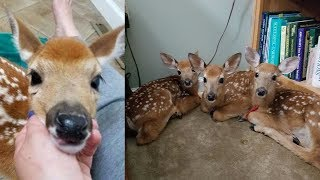 Woman doesn't close backdoor as storm nears, is stunned when she finds 3 baby deer inside
