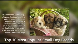 Top 10 Most Popular Small Dogs - Cutest Little Dogs | Weewoofters.com