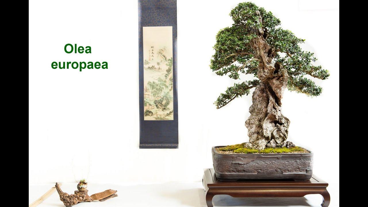 grandios ! ein toller Bonsai der schöne Wacholder