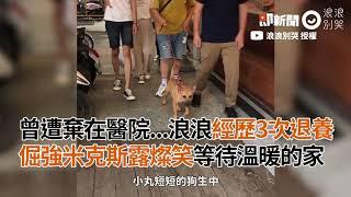 倔強米克斯犬遭棄 經歷3次退養 露燦笑等待溫暖的家|寵物|狗狗