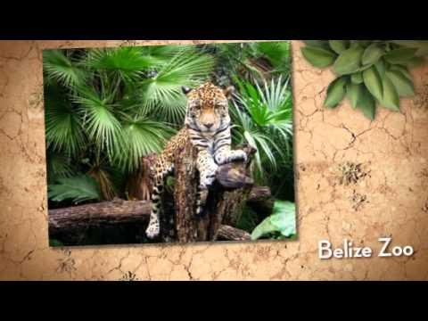 Belize Zoo