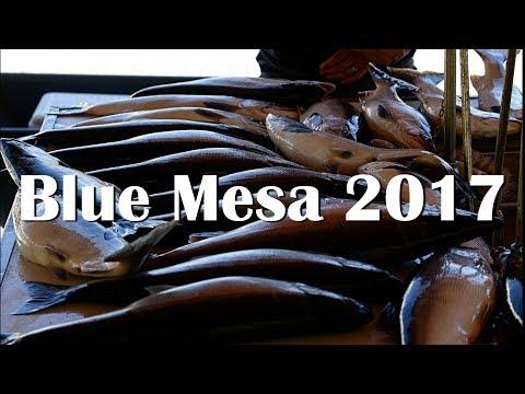 Blue Mesa 2017 - 30+ FISH LANDED!!!
