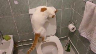 Кот ходит на унитаз и сам смывает за собой
