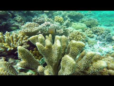 Palau Trip 2017