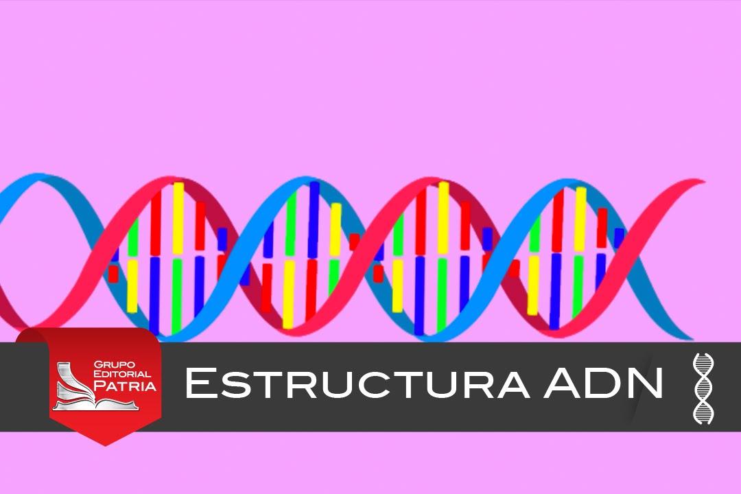Estructura Del Adn Biología