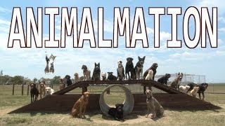 ANIMALMATION Stop Motion using 26 dogs and a cat