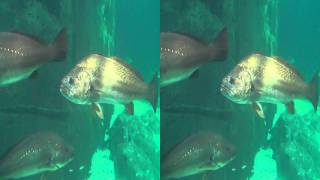 Two oceans aquarium sharks 3D side by side HD