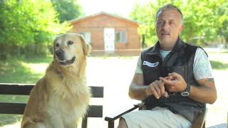 Köpeklere tuvalet eğitimi ne zaman ve nasıl verilmeli?