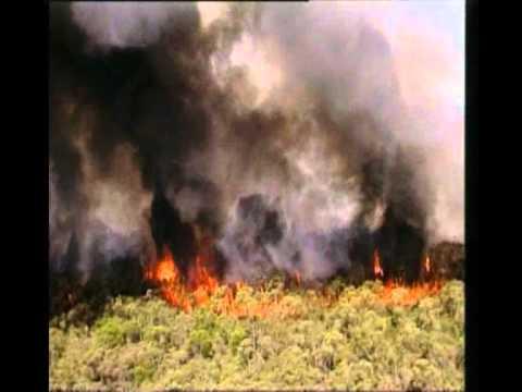 Der gefährdete Regenwald - Klima- und Artenschutz Trailer MedienLB
