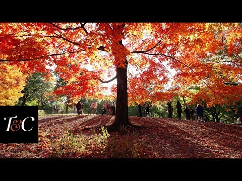 7 Places To See The Best Fall Foliage In New England