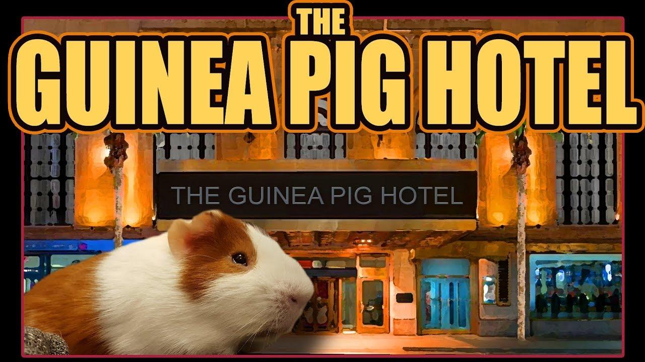 Piggy Casino