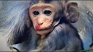 So Sorry for you Janet/Janet Failing Down From High Wall/Baby Breaks Noise-Eye Youlike Monkey
