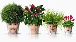 видео Растения знака зодиака Лев