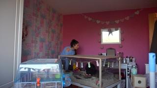 rearranging my pet room