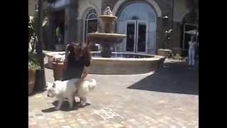 Trained Dogs For Sale Santa Monica California