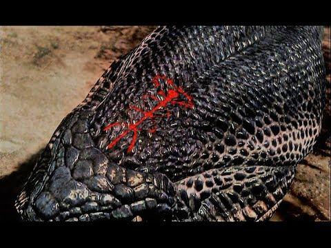 dragon dogma black hydra scale