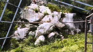Les vautours du Verdon, alliés des éleveurs pour un équarissage naturel