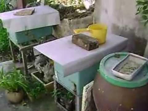 ong mật trong thùng bằng xốp khi ngoài trời ngót 60 độ
