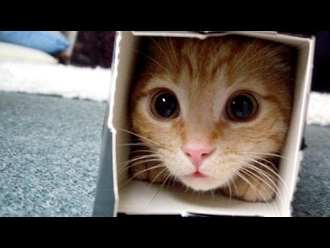 Thumbnail: Crazy & Funny ANIMAL videos - LAUGH and ENTERTAINMENT for EVERYONE