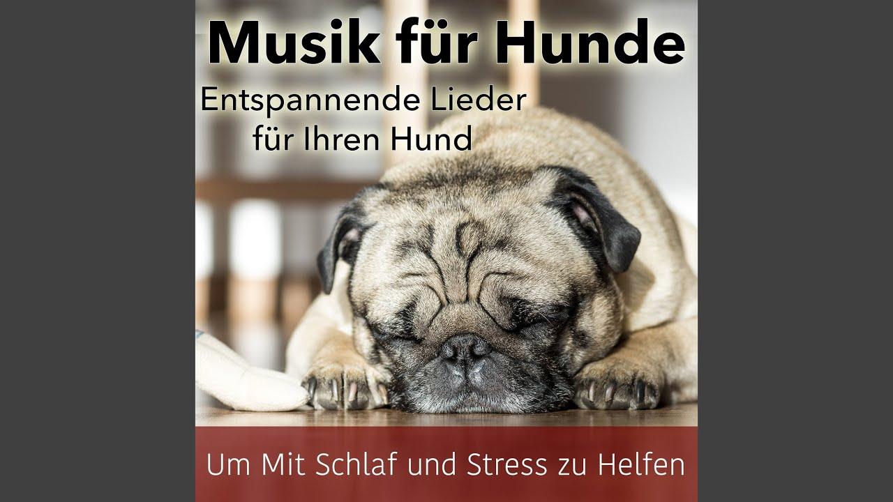 abd6d5e082cdfd Traumhafte Entspannende Klänge - YouTube