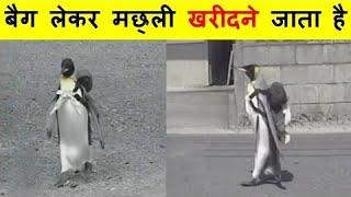 बैग लेकर मछली खरीदने जाता है ये पेंगुइन 🐧 #shorts #interestedfacts #mrguptafacts