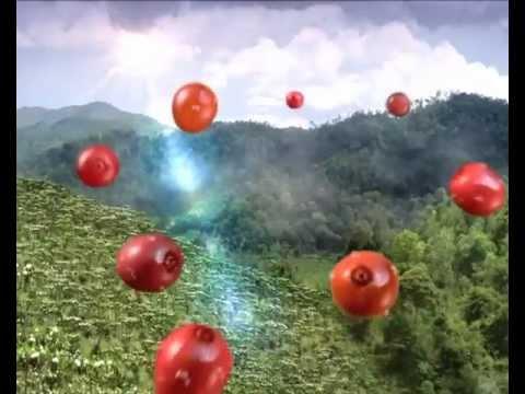 Vinacafe 2012 - 8 loại hạt cà phê ngon nhất Việt Nam