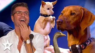 Best Animals Act Of 201920 That Amazed Judges! | Got Talent Global