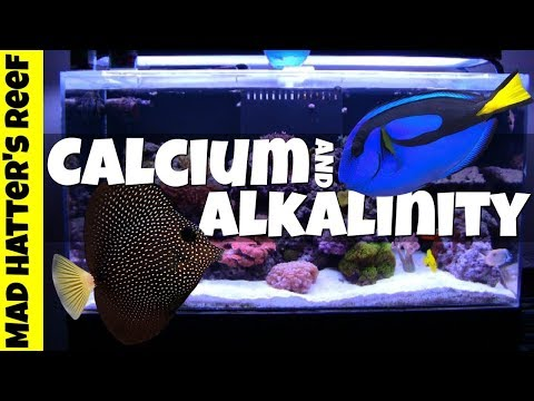 Testing And Dosing Calcium And Alkalinity By Hand