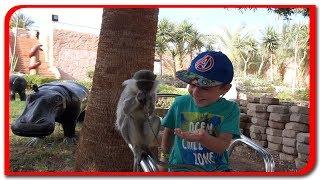 Hranim maimutele! Vlog Bogdan`s Show