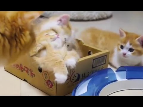 Cute Kittens Playing And Biting Till Mama Steps In | Funny Playful Kittens