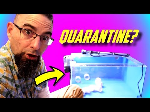 How To Setup A Fish Quarantine Tank!