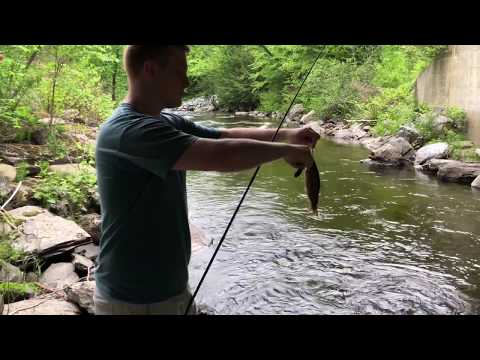 Vermont Trout Fishing - 10'' Brown Trout!