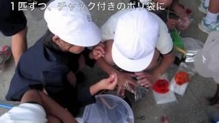 ひとはくで環境体験学習(稲美町立天満東小学校)