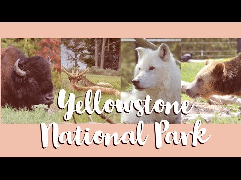 Yellowstone National Park - Animals Encountered - Summer 2018 - by Johnny Pham